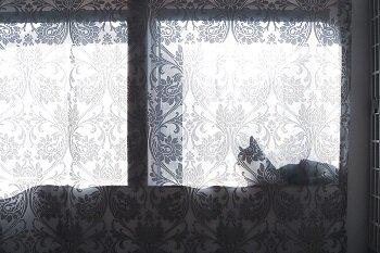 W350 cat_window_2f.jpg
