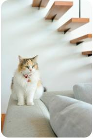 cat square.jpg