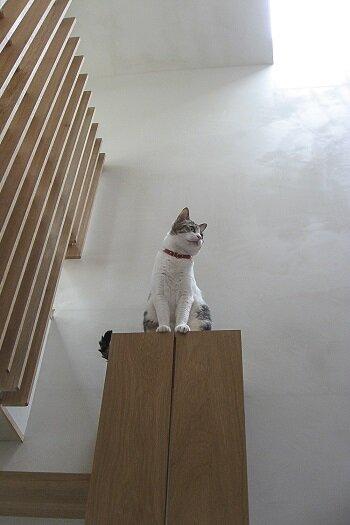 cat_step_1.jpg