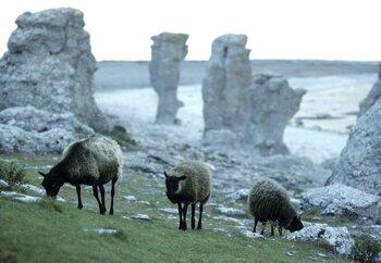羊3匹.jpg