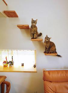 cats steps.jpg