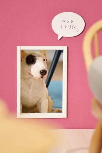 dogdoor 350.jpg